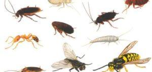 شركة مكافحة النمل الأبيض بجدة